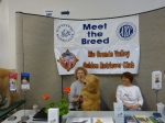 Rio Grande Valley Golden Retriever Club